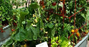 This is a great DIY for starting a container veggie garden. Explains everything...