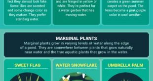 Create an oasis in your small garden by adding a water feature such as a fountai...