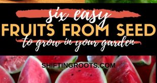Just because you live in a cold climate doesn't mean your options for growing fr...
