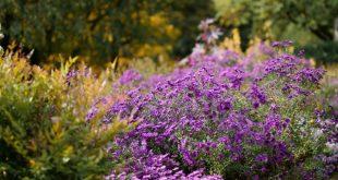 13 Gartenideen für einen pflegleichten Garten