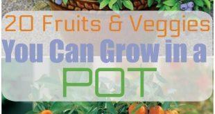 20 Obst und Gemüse, die Sie in Töpfen anbauen können
