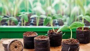 Aussaatkalender 2019: Was müssen Sie wann pflanzen?