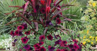 DIY inspirierende Blumentöpfe für Sommergärten