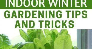 Indoor Winter Gardening Tips and Tricks A Must Have In Case The SHTF