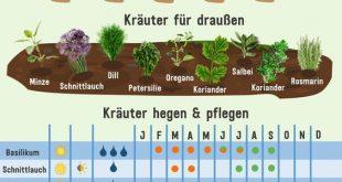 10 Kräuter selbst vermehren und ganzjährig ernten - Plantura