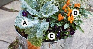 33 Stunning Fall Container Garden Ideas Fall Container-Garden Recipes