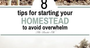 8 Tips to Start Your Homestead