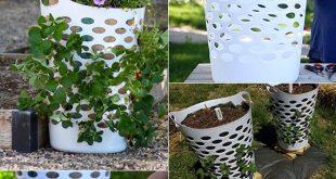 Erdbeeren pflanzen in DIY Containers – so geht's!