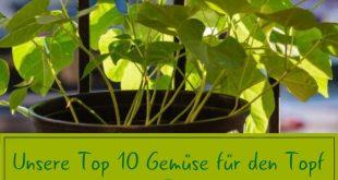 Gemüse im Topf anbauen: Die 10 besten Sorten für die Topfkultur - Plantura