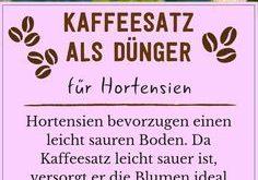 Kaffeesatz als Dünger: Verwendung & Vorteile des Hausmittels - Plantura