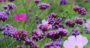 Meine Lieblingspflanzenkombinationen 57 #gardenideas #lieblingspflanzenkombinat...