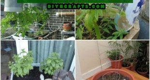 15 Selbstbewässernde Pflanzgefäße zum einfachen Gärtnern von Behältern