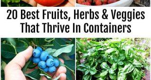 20 besten Früchte Kräuter und Gemüse die in Containern gedeihen