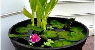 20 charmante und günstige Mini Water Garden Ideen für Ihr Haus und Garten