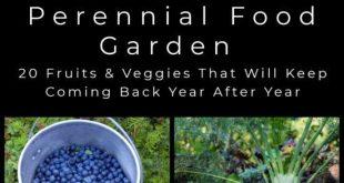 20 mehrjährige Früchte und Gemüse, die einmal gepflanzt und Jahr für Jahr geerntet werden