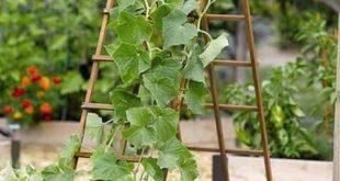21 einfache Ideen zum Bauen von DIY-Gittern für Gemüse und Obst