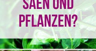 Aussaat & Pflanzen im September + Beispiel-Pflanzplan