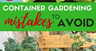 Avoid These 8 Mistakes for a Better Vegetable Container Garden