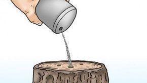 Baumstümpfe entfernen: Die wichtigsten Methoden im Überblick