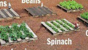 Die 20 besten Design-Ideen für Gemüsegärten für ein umweltbewusstes Leben
