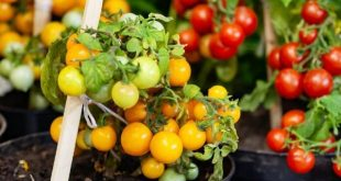 Easy Vegetables To Grow In Pots - Great For Small Spaces