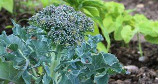 Gemüsegartenplanung 2019