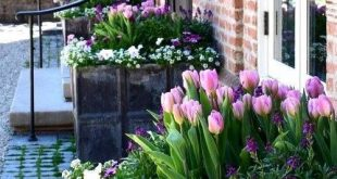 Gorgeous Spring container gardens