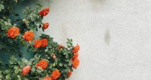 Lassen Sie es wachsen: Top 10 Gartentipps für Anfänger #anfanger #gartentipps...