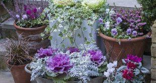 Pflanzen Sie Ihren Garten für den Winter. Mach es magisch
