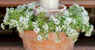 Schöne Behälter-Gartenarbeit-Blumen 10