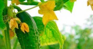 Vegetable Garden Growing Tips