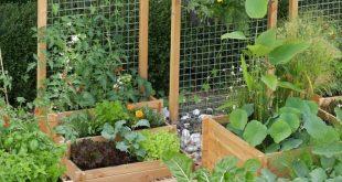 Vertikaler Draht ist eine weitere gute Option für ein Gartenspalier. ...