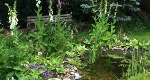 a small backyard pond as a water feature. Great idea for wildlife garden and tra